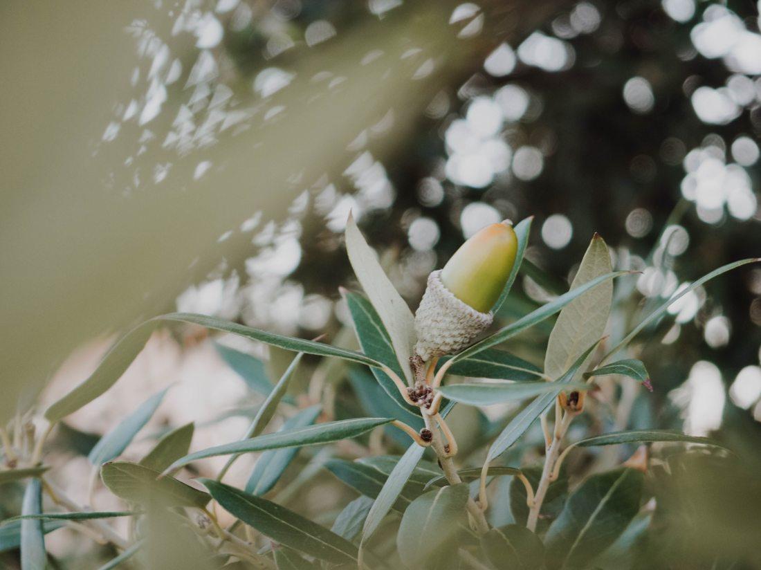 acorn-branch-macro-1772331
