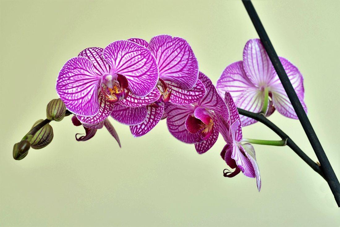 beautiful-bloom-blooming-459150