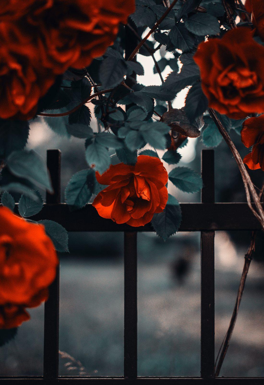 art-beautiful-bloom-1187078