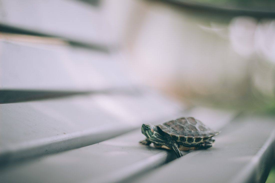 selective-focus-photography-of-turtle-on-bench-789141