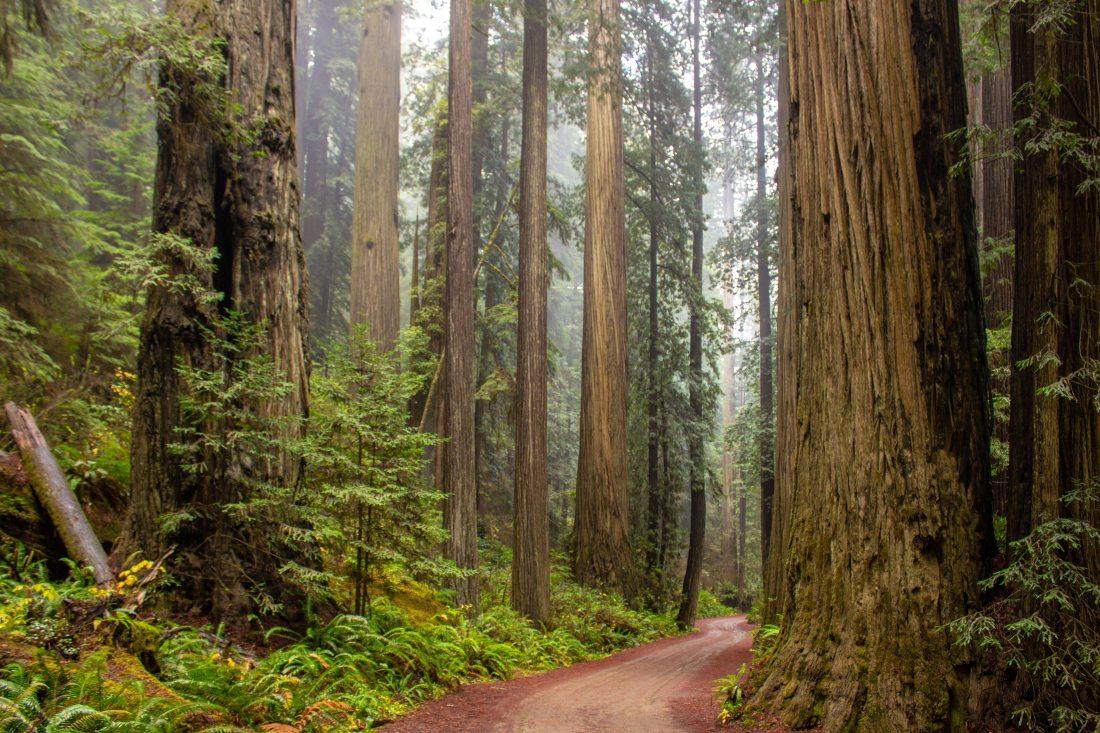 trees-beside-road-2645414
